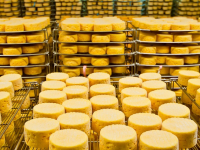 В Великом Новгороде нашли предприятие-фантом по производству сыров