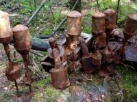 Вместо грибов жительница Марёвского района обнаружила «эхо войны»