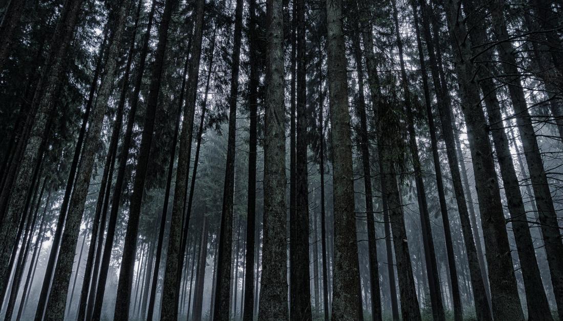 В новгородских лесах за сутки пропали два человека. Одного нашли