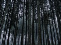 Новгородские спасатели вывели двоих потерявшихся из темного леса за полтора часа