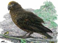Обнаружен гигантский доисторический попугай размером с ребёнка