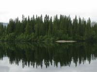 Поиски потерявшегося в лесу новгородца продолжились