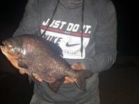 В Ловати снова поймали рыбу из семейства пираньевых