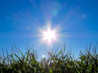 В Новгородской области ожидается умеренно тёплая погода