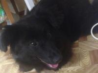 «Верный друг»: как дикая собака смогла стать домашним любимцем