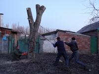 Что делать, если в вашем дворе незаконно вырубают деревья?