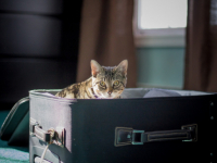Куда летали новгородские собаки и кошки летом 2019 года?