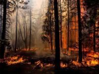 Новгородская область получит дополнительные средства на борьбу с лесными пожарами