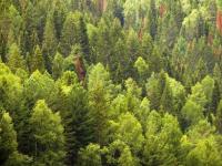 Завтра отметят профессиональный праздник работники лесного хозяйства