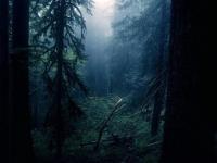 В лесах Пестовского района ищут очень пожилого мужчину