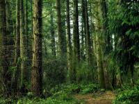 В лесах Солецкого района мужчину искали 16 человек, а он вышел оттуда сам