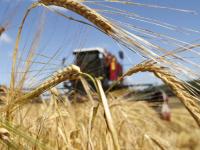 В Новгородской области на поддержку начинающих фермеров выделили 18 млн руб
