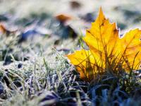 В Новгородскую область придет резкое похолодание