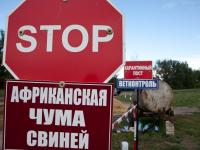 В Солецком районе сняли карантин по АЧС, а в Новгородском – изымают свиней