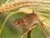 Вологодских школьниц прямо во время уроков покусала… мышь