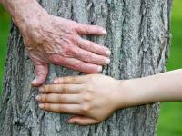 Более 5 тысяч пожилых новгородцев приняли участие в различных мероприятиях