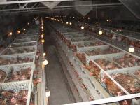 Инвесторам предлагают побороться за птицефабрику «Гвардеец»
