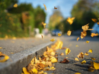 Какая погода ждет новгородцев в выходные, и какие сюрпризы преподнесет ноябрь?