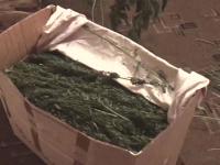 Новгородские полицейские конфисковали 22 кг наркотиков