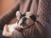 Присутствие собаки в доме влияет на продолжительность жизни хозяина