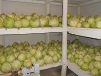 В боровичской колонии насобирали урожай сверх нормы