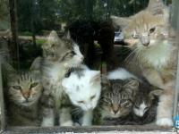 В Великом Новгороде до 8 октября решится судьба бездомных животных