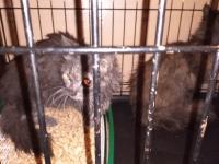 В Великом Новгороде угоревшие на пожаре кот и кошка попали в кислородную камеру