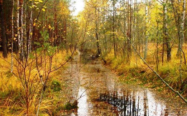 В Маловишерском районе спасатели вывели из болот трех женщин
