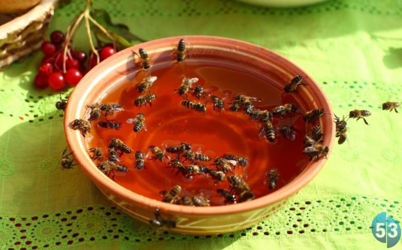 Где больше всего производят мёда: в Боровичском, в Новгородском или в Старорусском районах?