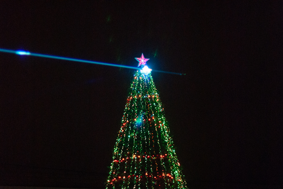 Боровичи выбрали момент купить новогоднюю ёлку